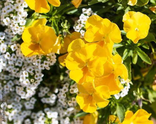 Small yellow flowers stock photo and royalty free images on fotolia small yellow flowers mightylinksfo