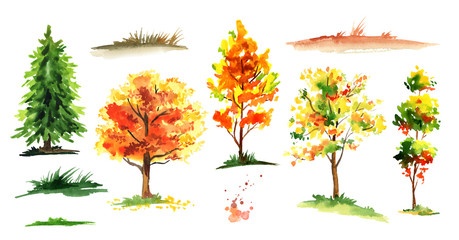 Autumn forest tree set. Watercolor hand drawn illustration