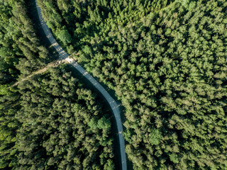 drone image. gravel road surrounded by pine forest from above
