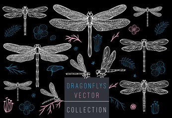 Dragonfly spring set sketch style collection insert wings emblem symbols dragonflies leaves floral flowers palm leaves branches pink blue delicate tattoo Hand drawn vector color illustration