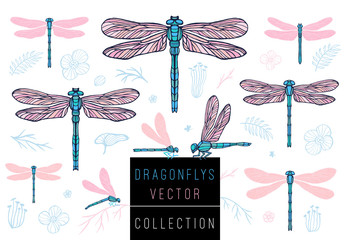 Dragonfly spring set sketch style collection insert wings emblem symbols dragonflies leaves floral flowers