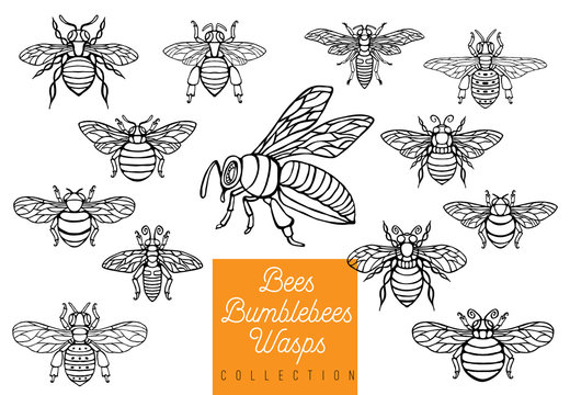 Honey bee bumblebees wasps set sketch style collection insert wings emblem symbols