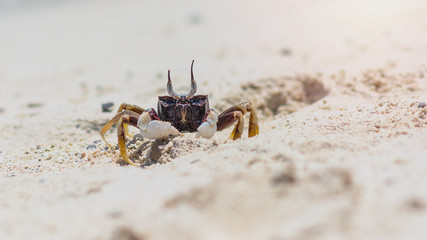 Close-up crab on the sand beach