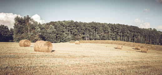 Multiple Hay Bales on Cut Hay Field With Forest Background Retro.