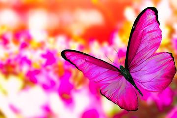 Большая бабочка с пурпурными крыльями на размытом цветочном фоне