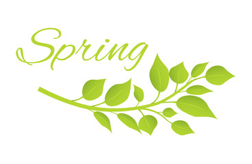 Spring and Tree Branch with Green Leaves on Poster