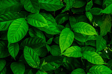 Creative tropical green leaves,for background,vintage tone.