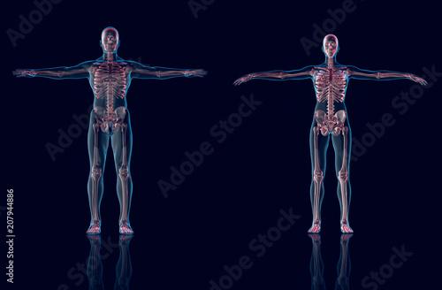 Hologram Manhologram Female Anatomy And Skeleton3d Rendering