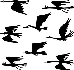 Silhouettes of fictional flying birds