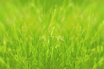 green natural background with grass, defocused
