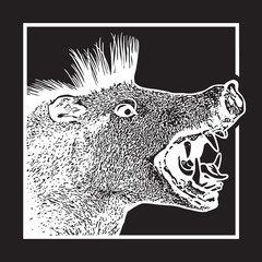 Screaming boar in graphic engraving style isolated on black background. Vector illustration of a head of wild pig. Open mouth with fangs and tongue - symbol of aggression and danger during a hunting.