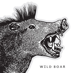 Screaming boar in graphic engraving style isolated on white background. Vector illustration of a head of wild pig. Open mouth with fangs and tongue - symbol of aggression and danger during a hunting.