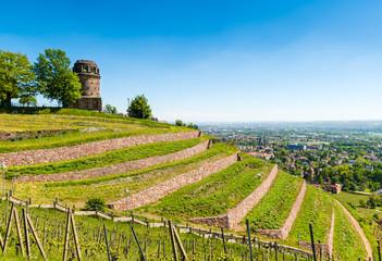 Weinberg mit Bismarckturm in Radebeul / Sachsen