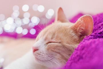 Chaton en train de dormir sur une couverture violette