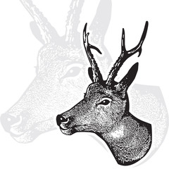 Deer head - graphic engraving isolated on white background.