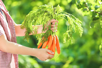 Young boy holding fresh carrots in the garden
