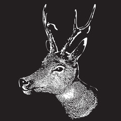 Deer head - graphic engraving illustration isolated on black background.