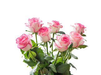 Beautiful bouquet of beige roses with a pink border isolated on white background