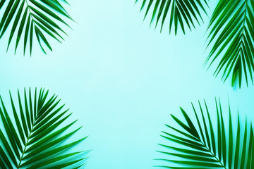 Tropical palm leaves on pastel blue background. Minimal summer concept. Creative flat lay with copy space. Top view green leaf on punchy pastel paper