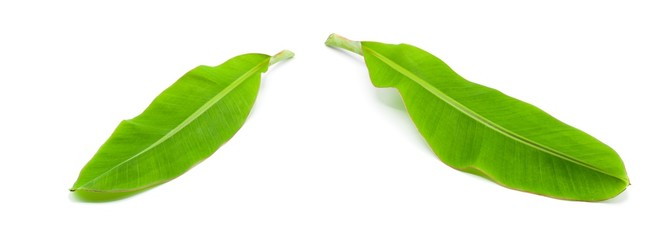 Fototapete - collection of green banana leaf isolated on white background