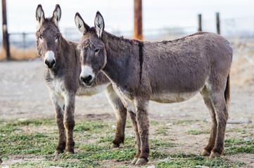 Tuinposter Ezel Donkeys