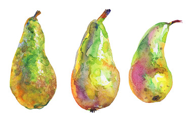 Hand drawn green pears. Watercolor fresh fruit on white background. Painting isolated illustration