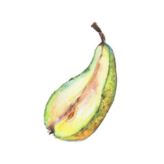 Hand drawn green half of pear. Watercolor fresh fruit on white background. Painting isolated illustration