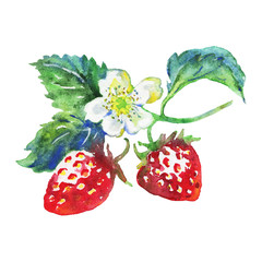 Watercolor fresh strawberry. Hand drawn summer berries on white background. Painting food illustration