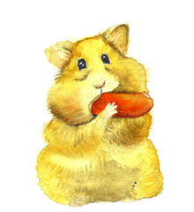 Funny hamster eating carrot watercolor illustration
