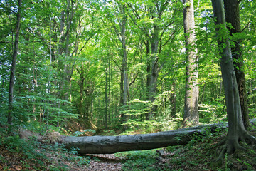 A fallen tree on a path in the forest