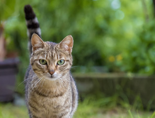 Portrait of beauty wild cat with green eyes in the garden