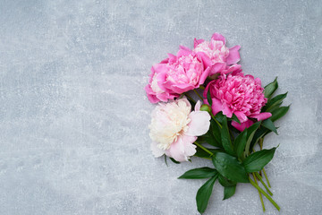 Beautiful pink peonies flowers on gray background. Copy space, top view. Greeting card