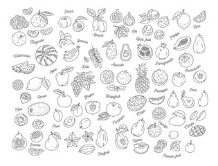 Fruit icon, Hand-drawn set of fruits. Vector flat illustration