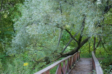 Old bridge in the summer forest