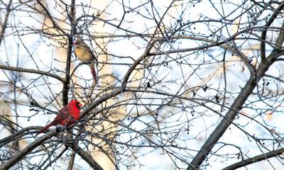 The Cardinal Pair