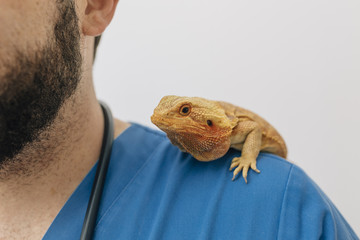 Orange lizard on the veterinary shoulder