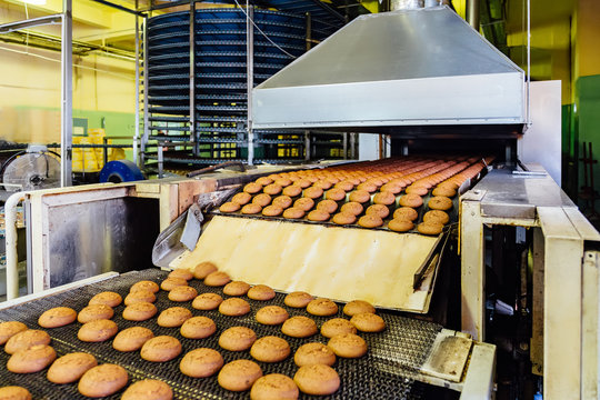 Production line of baking oat cookies. Biscuits on conveyor belt