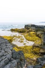 Yellow moss on lava shaped coastline in Hawaii