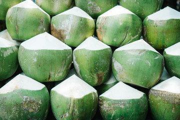 Green coconuts in rows