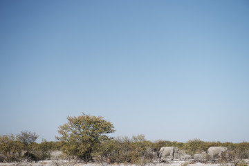 Elephants in the Etosha National Park