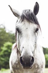 Lovely Detail of White Horse