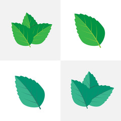 Mint green vector illustration. Mint leaves vector logo