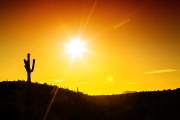 Wall Mural - Phoenix Arizona Desert Sunset Silhouette