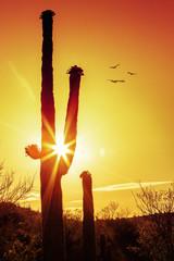 Saguaro Cactus Silhouette at Sunrise