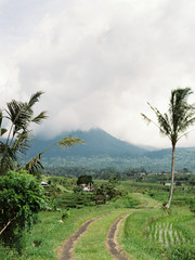 Tropical landscape with mountains