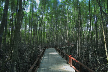 educational trail in mangrove forest. wetland learning center. broad walk in natural ecosystem.