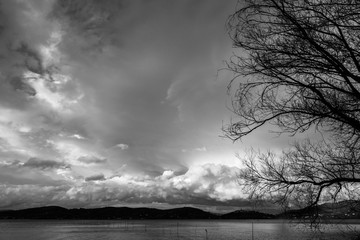 Tree branches on a lake shore, with beautiful, big clouds in the