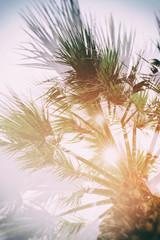 Palmtree double exposure