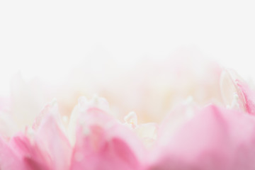Sweet color lotus  in soft style for background Fototapete
