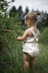 Young toddler picking blueberries